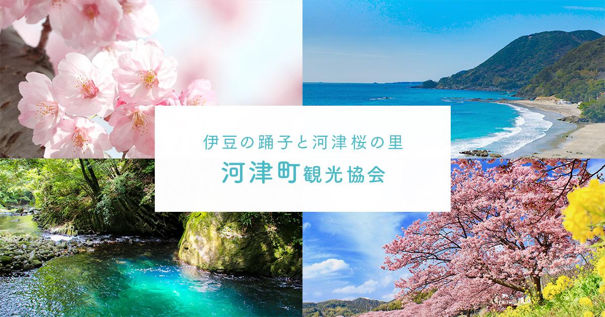 桜 伊豆 河津